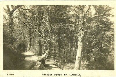 Stradey Woods Near Llanelly 1919 Real Photo Kingsway Postcard