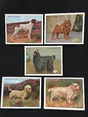 Cigarette Cards & Collectables **5 Wills Dogs 2nd Cards**