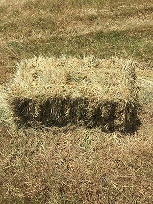 New Season Small Square Bale Pasture Hay. Just baled. Pick up from Whittlesea.