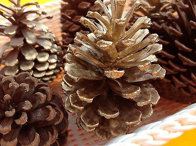 PINE CONES - 6 GOLD - Christmas decor.woodlands rustic weddings,  floral decor