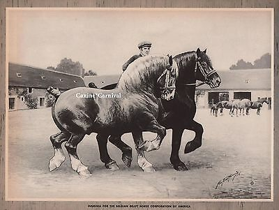 INSIGNIA -Belgian Draft HORSE CORPORATION by George Ford Morris ART PRINT 1952