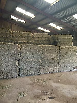 Cattle Hay. 6 String.