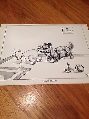 Vintage Print by Zito with Skye Terrier - 1941