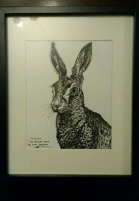 british hare picture original ink drawing