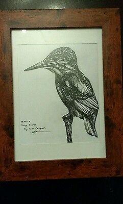 Original ink drawing of a kingfisher