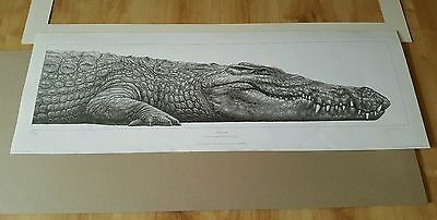 Gary Hodges Nile Crocodile Signed Limited Edition Print
