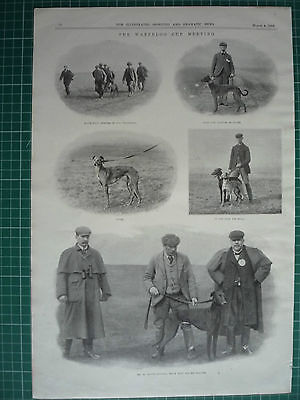 """Victorian Coursing Print. """" The Waterloo Cup Meeting."""" 1899."""
