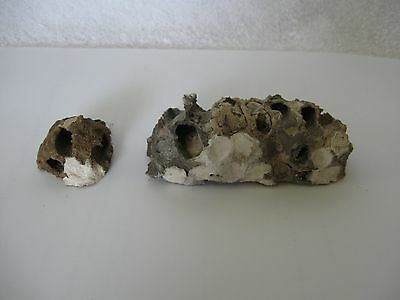 2 Mixed Color Texas Dirt Mud Dauber Nests ~ Science Project, Taxidermy Boy Scout