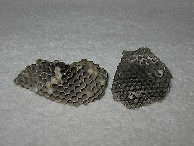 2 Medium Texas Paper Yellow Jacket Nests Taxidermy Science Project Boy Scout
