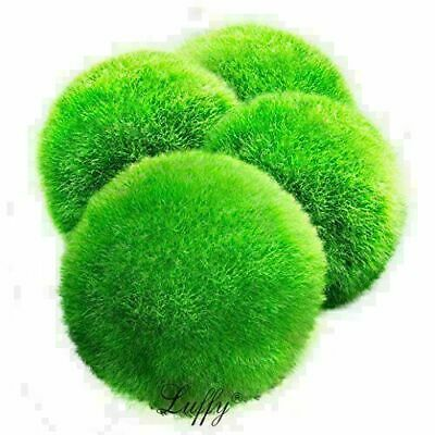 4 LUFFY Marimo Moss Balls - Giant, Eco-Friendly Aquarium Product New
