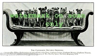 Vintage B & W Photo~Copthorne Brussels Griffon Dog Dogs on Couch~NEW Note Cards