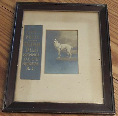 1900 Antique Delaware Valley Kennel Club First Prize Bull Terrier dog photograph