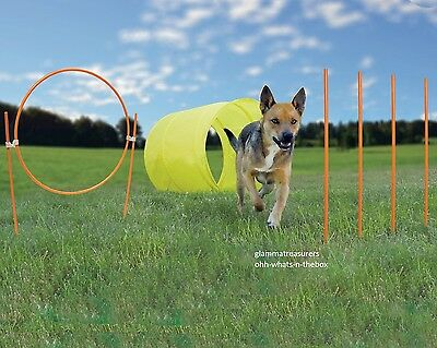 Dog Agility Exercise Obstacle Course Training Toys Park Weave Poie Jump Tunnel