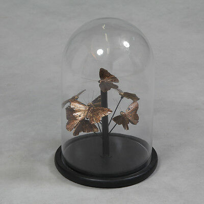 Glass Display Cloche Dome Bell Jar With Butterfly Display