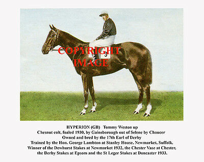 HYPERION and Tommy Weston: 1933 Derby winners 10x8 colour, fully captioned
