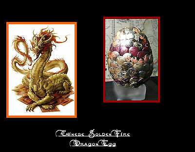 Chinese Golden Fire Dragon Egg W/ amulet   Game of Thrones, Harry Potter,
