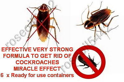 6 x containers MIRACLE EFFECT NO MORE COCKROACH KILLER BED BUGS  best