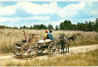 Vintage Post Card Mules Wagon Farming Hand Plow Seed Flour Family   # 4642