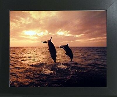 Dolphins Diving Symphony Ocean Sea Underwater Animal Wall Decor Framed Picture