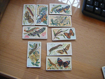 """Pick-A-Card From Player's """"butterflies & Moths"""" Very  Old -  1904"""