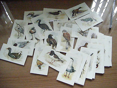 """Full Set Of Xl Cards From Grandee """"british Birds Collection""""  1980"""