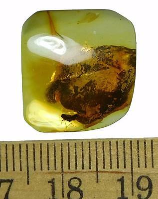 *HHC* Baltic Amber, Fossil inclusion, Botanical fragment with insect (SKU #606)
