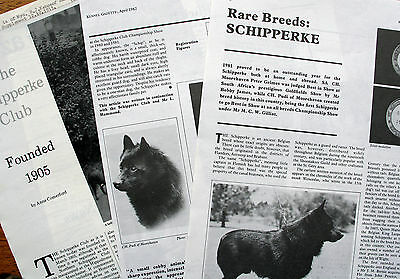 SCHIPPERKE DOG KENNEL CLIPPINGS 1980s-90s inc KG Rare breeds article 1982  x 30