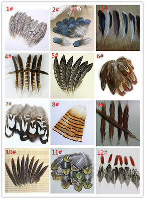 Wholesale 10-100PCS 4-20cm/2-8inches Beautiful Pheasant Tail & Peacock Feathers