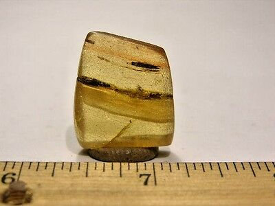 Insects in polished amber ant & gnat 1 x3/4 inch weighing 2.6 gram em65