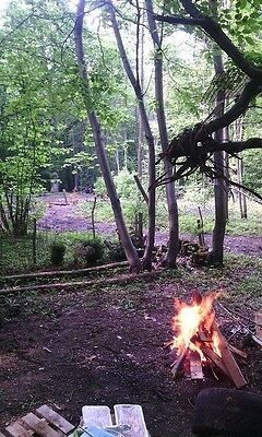 Freehold 202SM/Forest Land For Sale -Ninfield Good Investment/Camping/Holiday