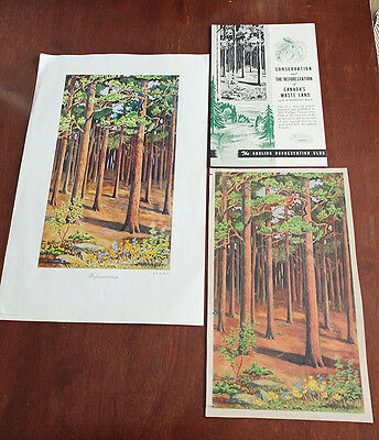 1946 Carling Breweries Conservation Club Picture & Pamphlet - Reforestation
