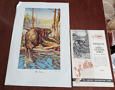 1946 Carling Breweries Conservation Club Picture & Pamphlet - The Beaver