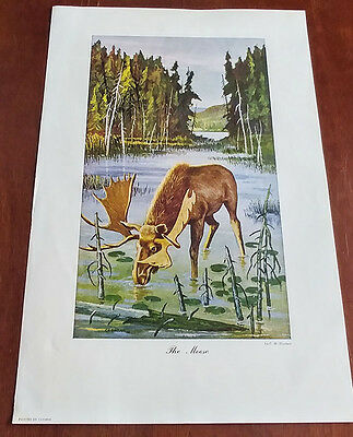 1946 Carling Breweries Conservation Club Picture - The Moose - C.H. Sinclair