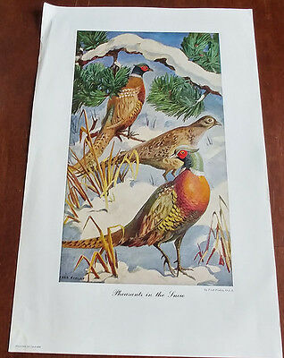 1946 Carling Breweries Conservation Club Picture - Pheasants In The Snow