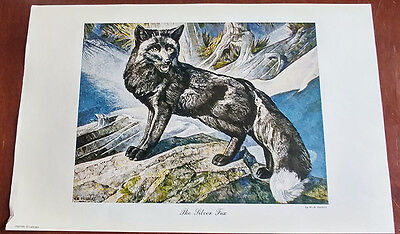 1946 Carling Breweries Conservation Club Picture - The Silver Fox