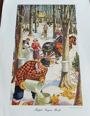 1946 Carling Breweries Conservation Club Picture - The Maple Sugar Bush