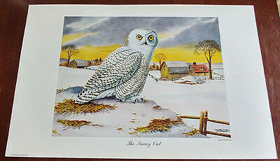 1946 Carling Breweries Conservation Club Picture - The Snowy Owl