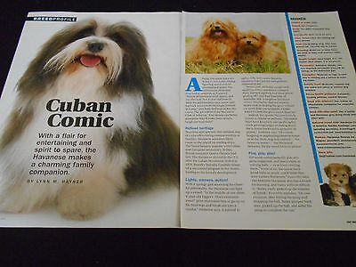 HAVANESE dogs in magazineads/clippings lot *