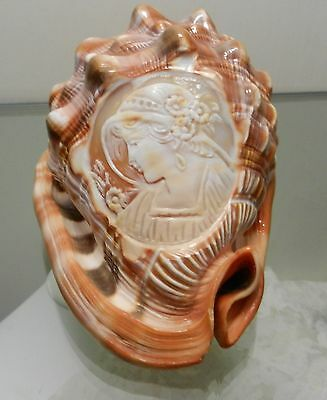 Cameo Hand Carved  Conch Shell Artist In Torre Del Greco Italy Gennaro Barriello