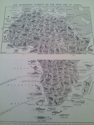 Map of Animals Wildlife Birds Fish of Africa 1924 2 Small Pages to Frame