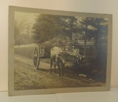 REAL VINTAGE PHOTOGRAPH 10 1/2 in x 13 1/2 in TWO COWS PULLING CART