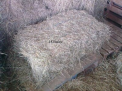 Hay bales, Free Delivery, good quality small bale hay, equestrian
