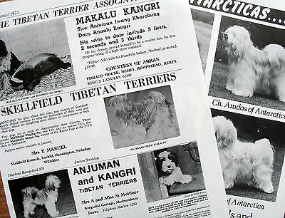 TIBETAN TERRIER DOG KENNEL CLIPPINGS 1940s - 1980s x 40