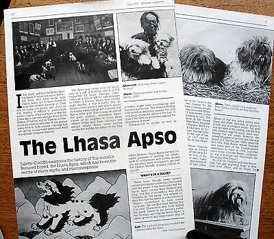 LHASA APSO DOG KENNEL CLIPPINGS incl breed history article1960s - 2000s x 40