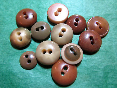 """(12)  1/2""""+ BROWN TONES VEGETABLE IVORY 2-HOLE CRAFT BUTTONS - ASSORTED Lot#L351"""