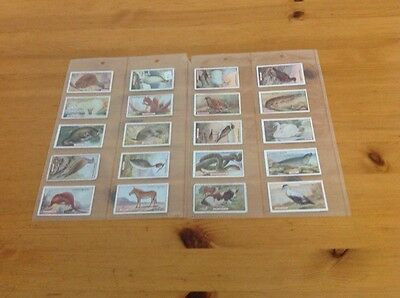 cigarette cards.Gallaher.Animal and birds of commercial value. fair to good.