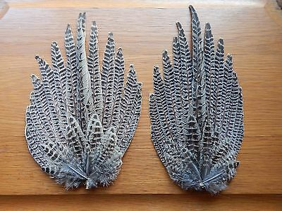 2 Hen Pheasant Full Tails  Feathers  Wings Fly Tying Arts Crafts