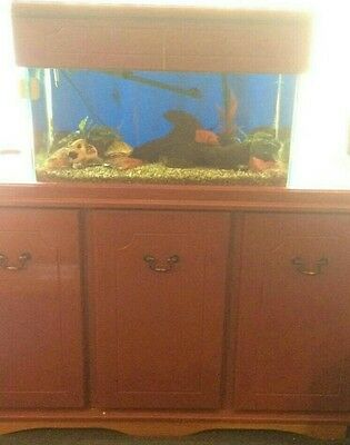 fish tank with light and cabinet
