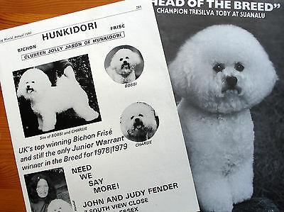 BICHON FRISE TOY DOG KENNEL CLIPPINGS 1980s- 00s  x 40