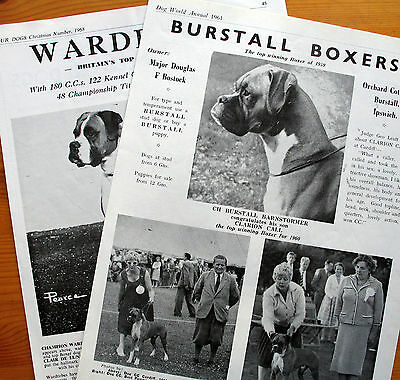 BOXER DOG BREED KENNEL CLIPPINGS  1960s  x 40